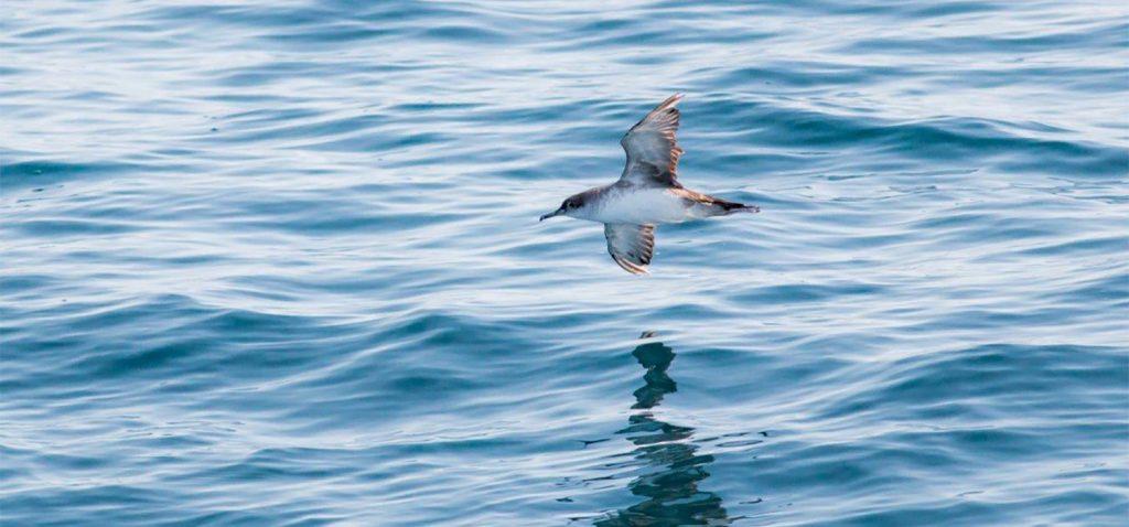 Investigadores de la UCA activan el proyecto 'Ecofish' para mejorar la sostenibilidad de las pesquerías en el Golfo de Cádiz