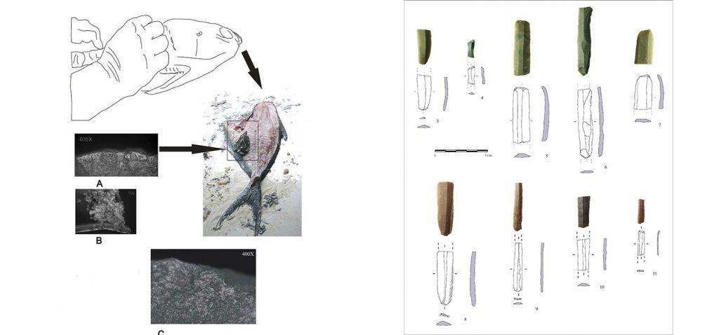 La UCA participa en un estudio donde se demuestra que hace 5.000 años ya se procesaba el pescado en la costa atlántica gaditana