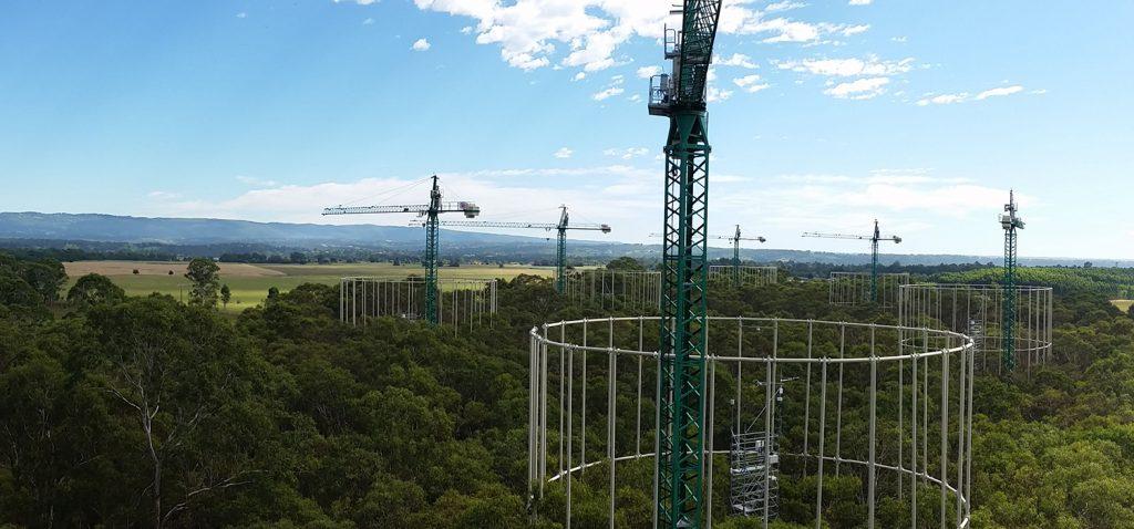 Un estudio, en el que participa la UCA, revela que los bosques maduros no contribuirán a secuestrar más carbono atmosférico