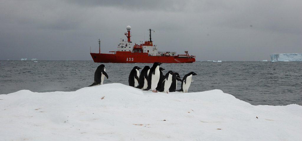 Investigadores de la UCA participan en un proyecto que analiza la influencia de los pingüinos en los ciclos bioquímicos de la Antártida