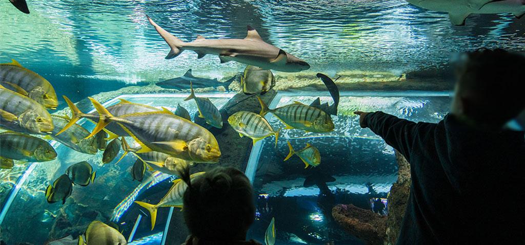El CEI·Mar y el Parque de las Ciencias de Granada se unen para impulsar la divulgación del mundo marino