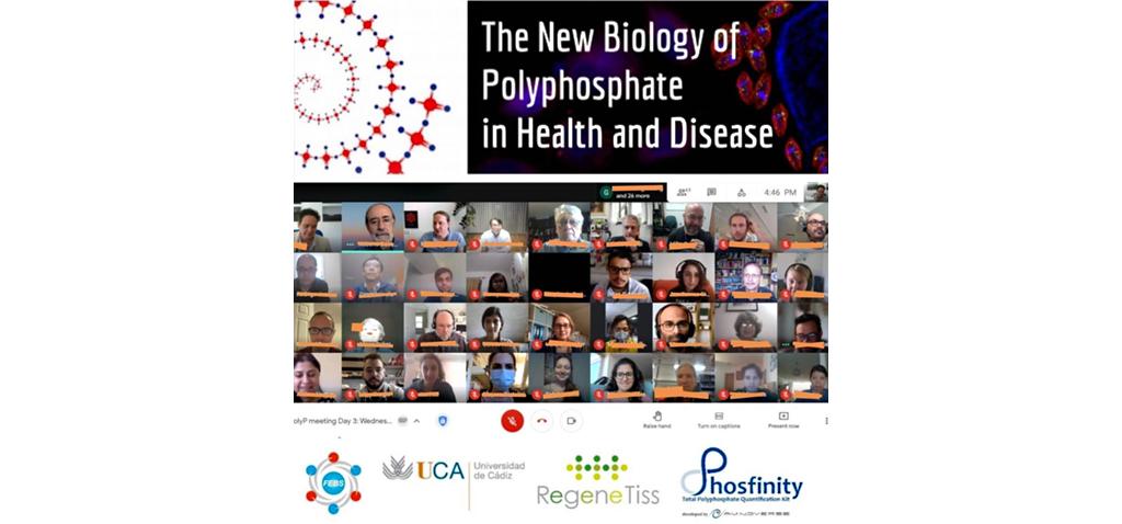 La Universidad de Cádiz, anfitriona de un congreso internacional sobre polímeros de fosfato