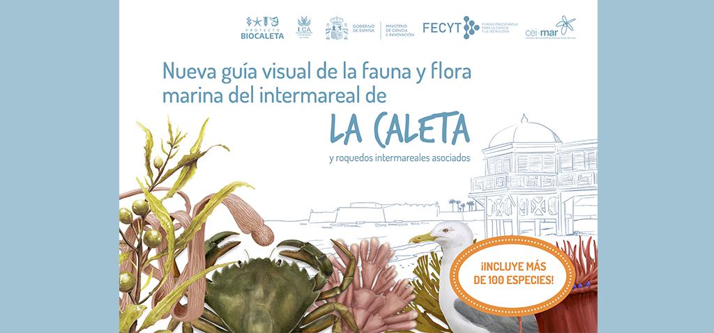La UCA publica una nueva guía visual sobre la biodiversidad de La Caleta con más de 100 especies de animales y algas